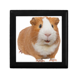 red guinea pig gift box