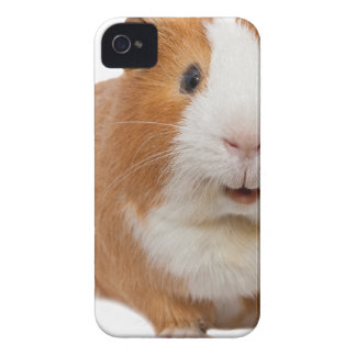 red guinea pig iPhone 4 case
