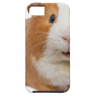 red guinea pig iPhone 5 cover