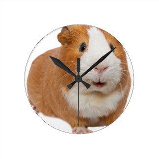 red guinea pig round clock