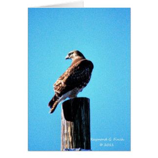 Red Hawk Card
