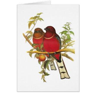 Red-headed Trogon Card