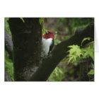 Red-headed woodpecker card