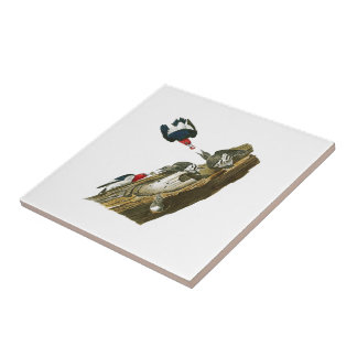 Red headed Woodpecker John Audubon Birds America Tile