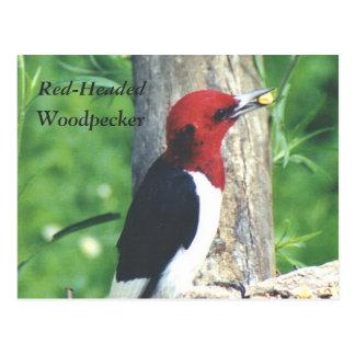 Red-Headed , Woodpecker postcard