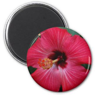 Red Hibiscus 6 Cm Round Magnet