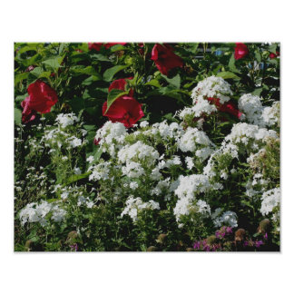 Red Hibiscus And White Phlox Flower Garden Print