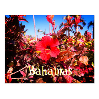 Red Hibiscus Bahamas Postcard