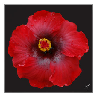 Red Hibiscus; Canvas Print