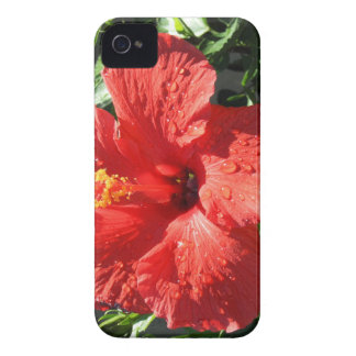 red hibiscus blackberry bold cases