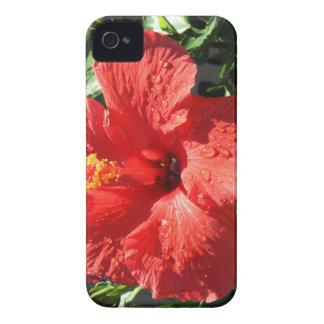 red hibiscus iPhone 4 case