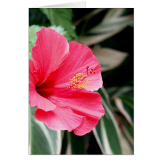 Red hibiscus flower large bloom greeting card