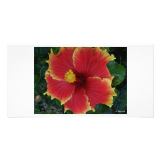 Red Hibiscus Flower - Photography Aggelikis Customized Photo Card