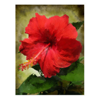 Red Hibiscus Flower Postcard