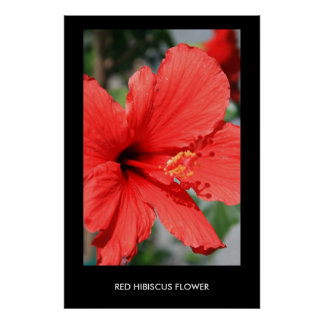 Red Hibiscus Flower Poster,Print Poster