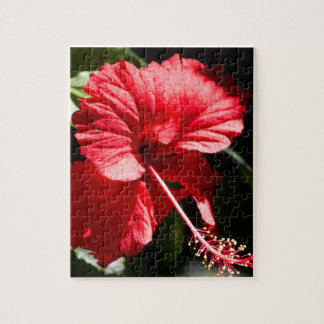Red Hibiscus in the Sun Jigsaw Puzzle