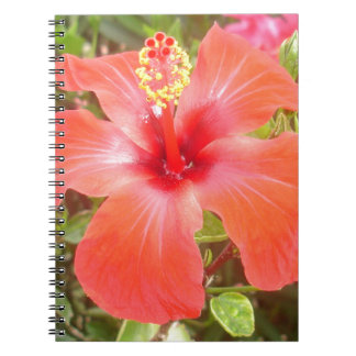 Red Hibiscus Notebooks