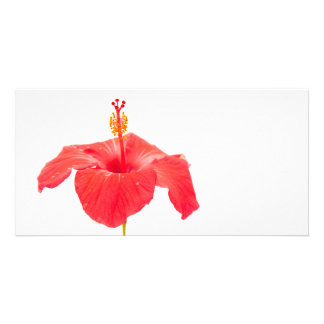 red hibiscus on white postcard customised photo card