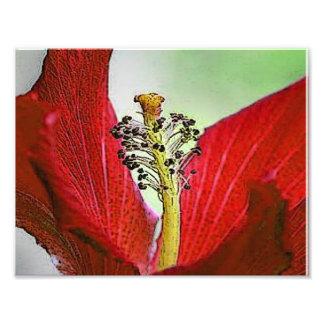 Red Hibiscus Art Photo