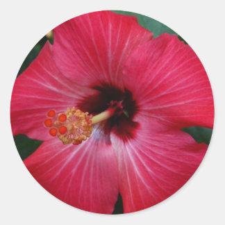 Red Hibiscus Round Sticker