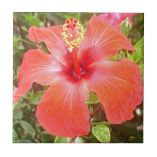 Red Hibiscus Tile