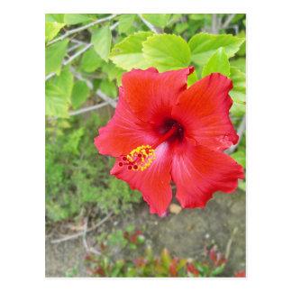 Red Hibiscus Yellow stigma Postcard