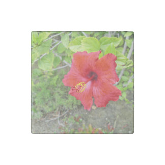 Red Hibiscus Yellow stigma Stone Magnet