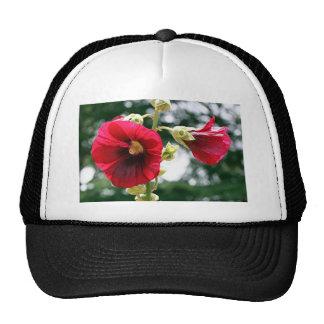 Red Hollyhock flowers in bloom Mesh Hat
