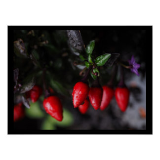 Red Hot Garden Salsa Chili Peppers. Poster