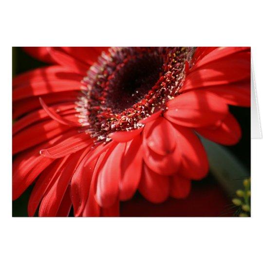 Red Hot Gerbera Card