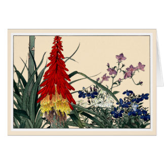 Red Hot Poker Botanical Art Card