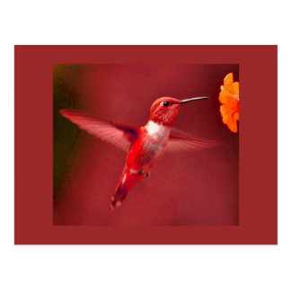 RED HUMMINGBIRD POSTCARD