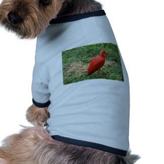 Red Ibis Ringer Dog Shirt