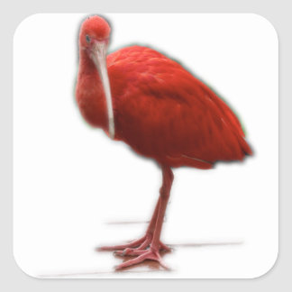 Red Ibis give this to the bird lover in your life Square Sticker