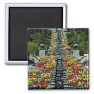 Red In the park, Mainau flowers Square Magnet