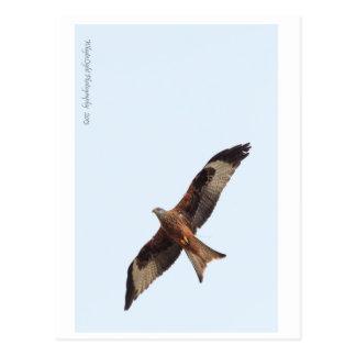 Red Kite In Sky Postcard
