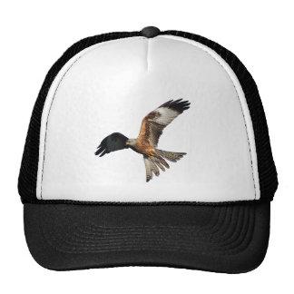 Red Kite - Milvus milvus Cap