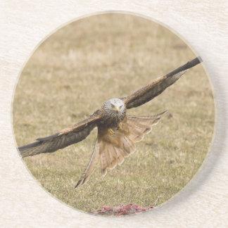 Red Kite (Milvus Milvus) Coaster