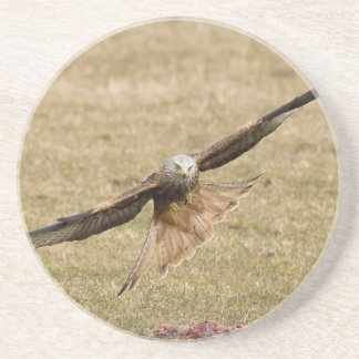 Red Kite (Milvus Milvus) Drink Coaster