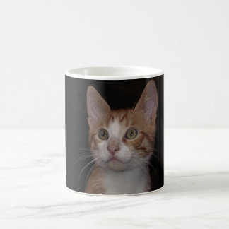 Red kitty - young cat, black background coffee mug