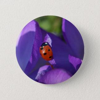 Red ladybird on crocus 6 cm round badge