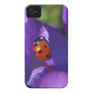 Red ladybird on crocus Case-Mate iPhone 4 case