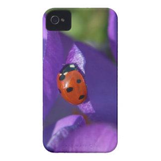 Red ladybird on crocus iPhone 4 covers