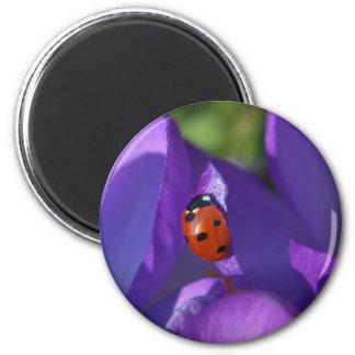 Red ladybird on crocus magnet