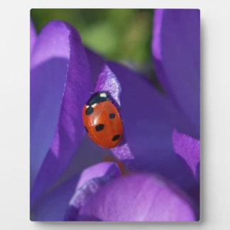Red ladybird on crocus plaque