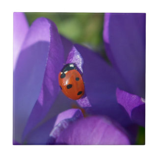 Red ladybird on crocus small square tile