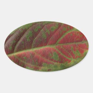 Red Leaf closeup oval sticker, sealer, label Oval Sticker