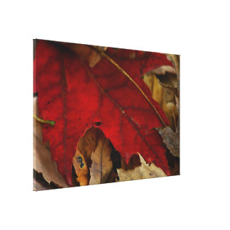 Red Leaf in Autumn Gallery Wrapped Canvas