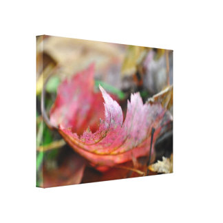 Red Leaf in the Autumn Color Photo Wall Decor Stretched Canvas Print