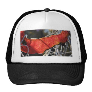 Red leaf with Spanish Moss Hats